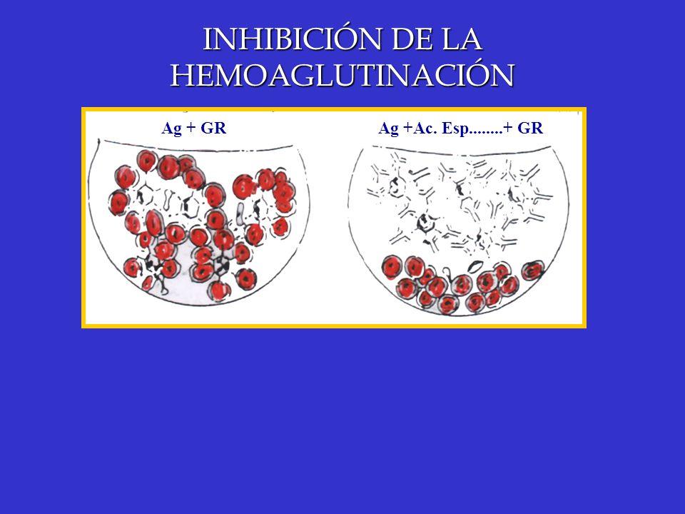 INHIBICIÓN DE LA HEMOAGLUTINACIÓN Ag + GRAg +Ac. Esp........+ GR