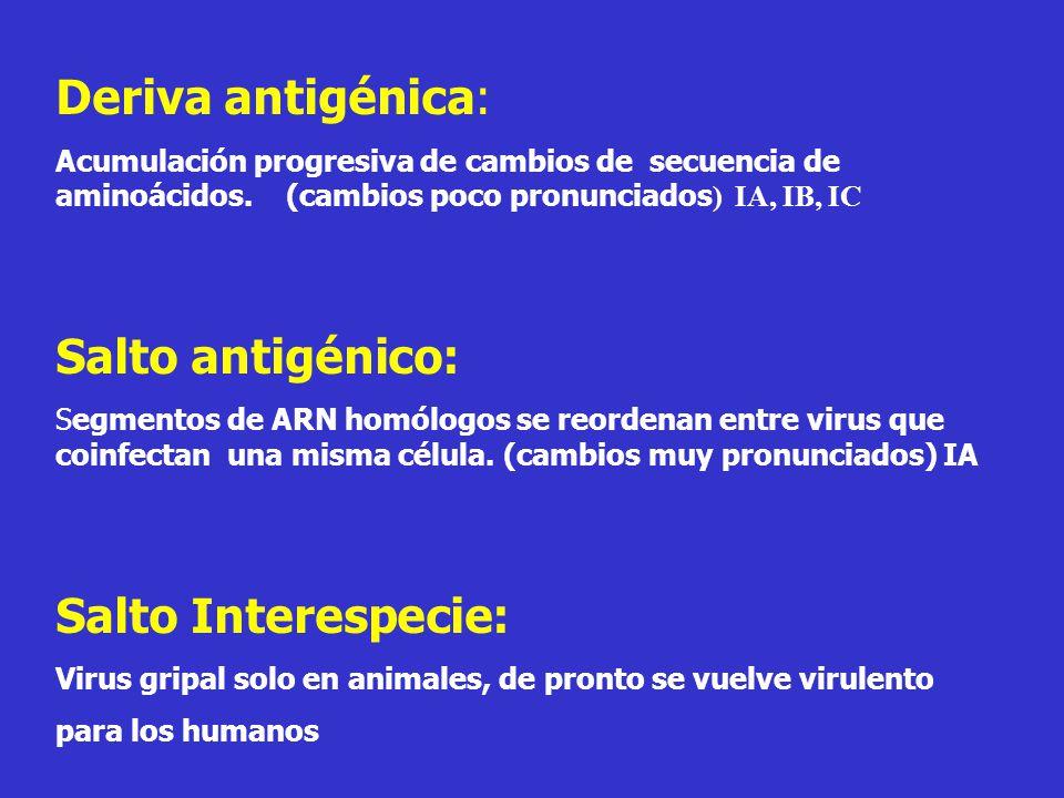 Deriva antigénica: Acumulación progresiva de cambios de secuencia de aminoácidos.
