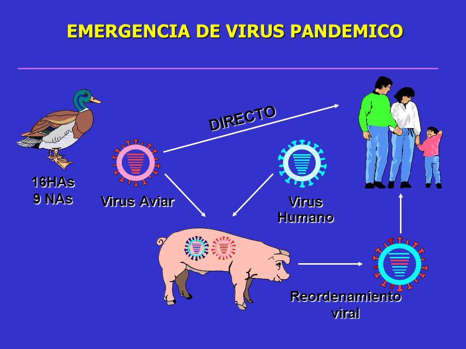Virus Humano Reordenamiento viral Virus Aviar EMERGENCIA DE VIRUS PANDEMICO 16HAs 9 NAs DIRECTO