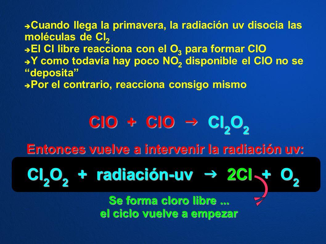 Cuando llega la primavera, la radiación uv disocia las moléculas de Cl 2 El Cl libre reacciona con el O 3 para formar ClO Y como todavía hay poco NO 2