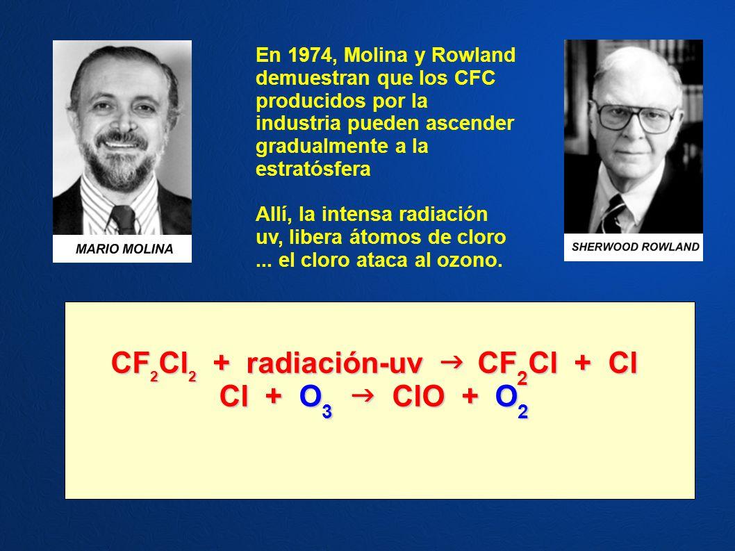 En 1974, Molina y Rowland demuestran que los CFC producidos por la industria pueden ascender gradualmente a la estratósfera Allí, la intensa radiación