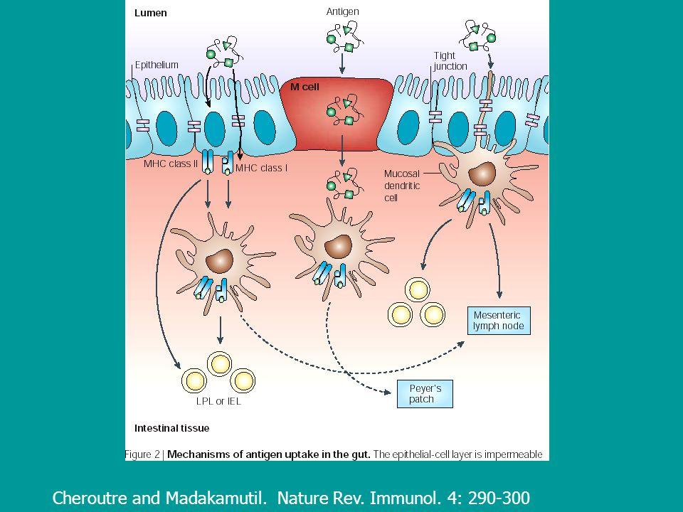 Cheroutre and Madakamutil. Nature Rev. Immunol. 4: 290-300