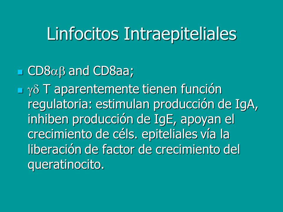 Linfocitos Intraepiteliales CD8 and CD8aa; CD8 and CD8aa; T aparentemente tienen función regulatoria: estimulan producción de IgA, inhiben producción