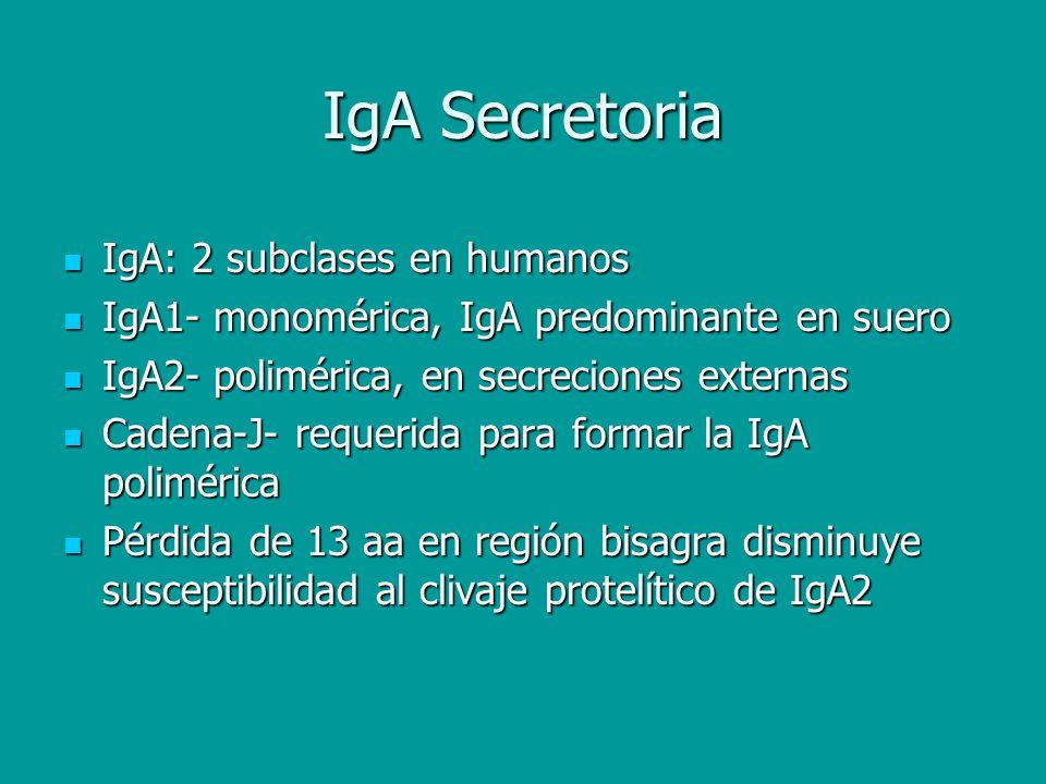 IgA Secretoria IgA: 2 subclases en humanos IgA: 2 subclases en humanos IgA1- monomérica, IgA predominante en suero IgA1- monomérica, IgA predominante