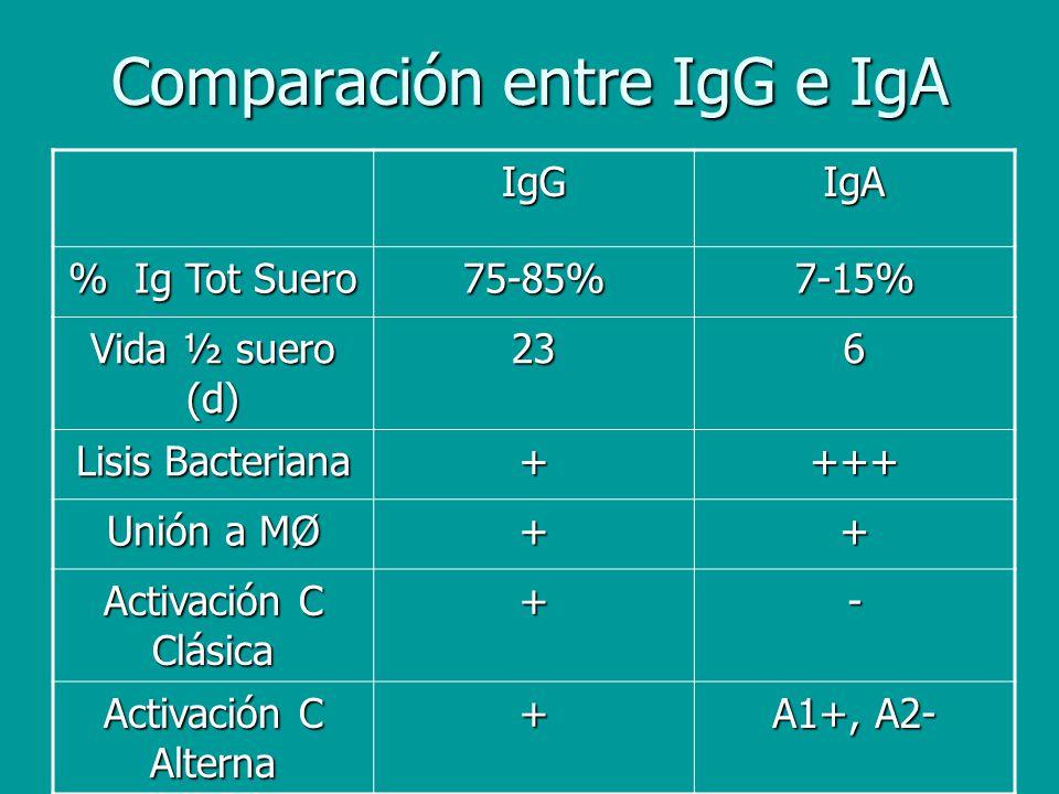 Comparación entre IgG e IgA IgGIgA % Ig Tot Suero 75-85%7-15% Vida ½ suero (d) 236 Lisis Bacteriana ++++ Unión a MØ ++ Activación C Clásica +- Activac