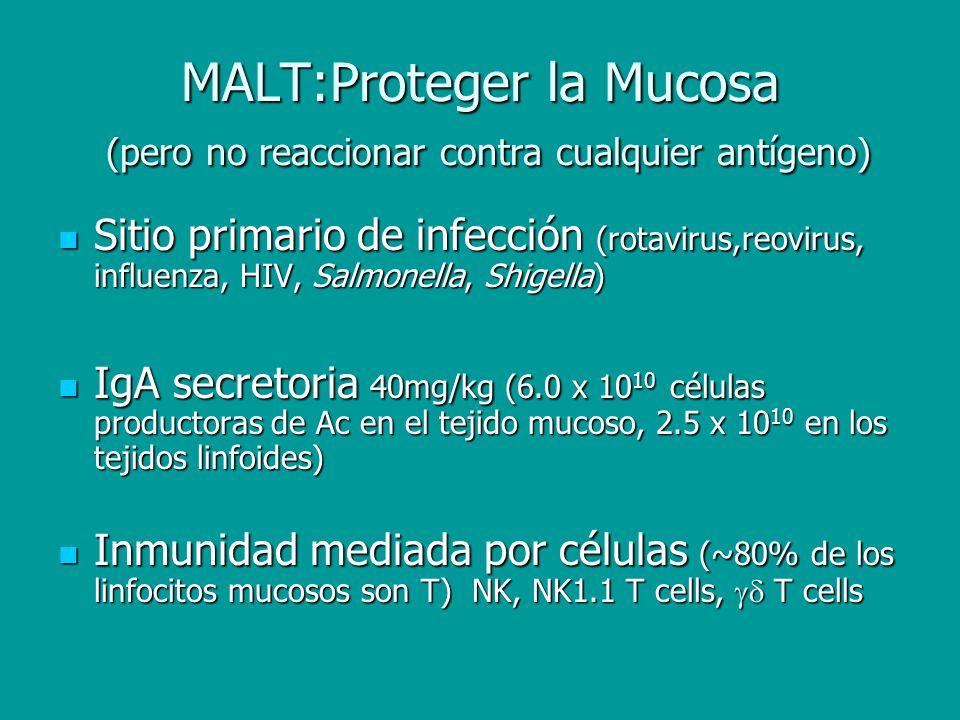 MALT:Proteger la Mucosa (pero no reaccionar contra cualquier antígeno) Sitio primario de infección (rotavirus,reovirus, influenza, HIV, Salmonella, Sh
