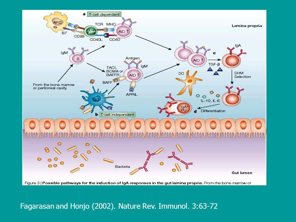 Fagarasan and Honjo (2002). Nature Rev. Immunol. 3:63-72