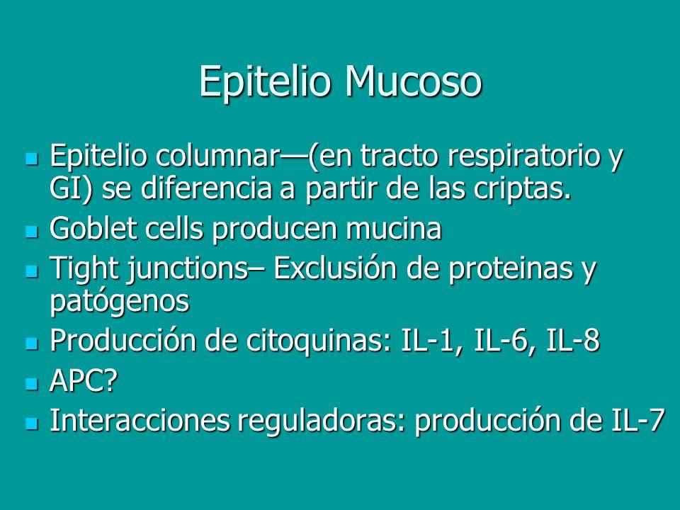 Epitelio Mucoso Epitelio columnar(en tracto respiratorio y GI) se diferencia a partir de las criptas. Epitelio columnar(en tracto respiratorio y GI) s