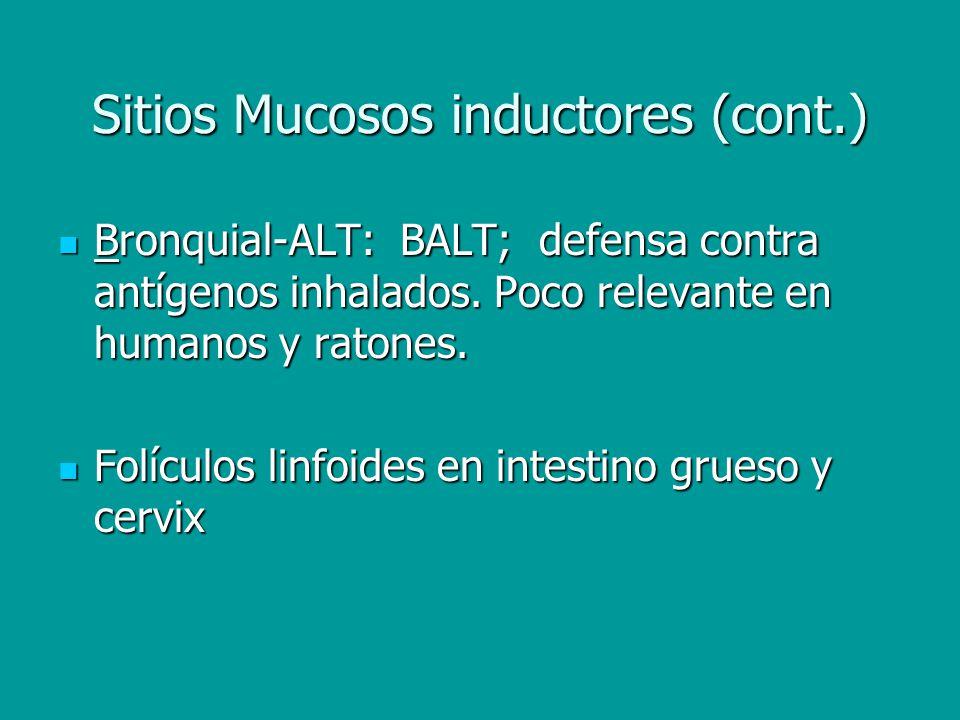 Anatomía del MALT Placas de Peyer Placas de Peyer Zonas B; gran cantidad de linfocitos B IgA+ Zonas B; gran cantidad de linfocitos B IgA+ Zonas T; colaboración en respuestas a IgA, efectores CD4+, precursores CD8+ Zonas T; colaboración en respuestas a IgA, efectores CD4+, precursores CD8+ Epitelio Asociado al Folículo (FAE); microvillus, captación de Ags.