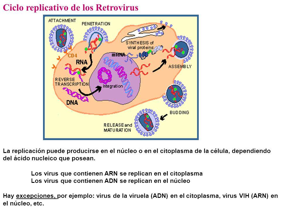 Ciclo replicativo de los Retrovirus La replicación puede producirse en el núcleo o en el citoplasma de la célula, dependiendo del ácido nucleico que posean.