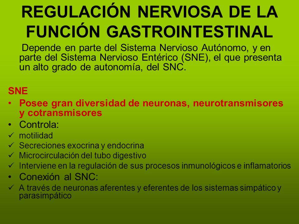 REGULACIÓN NERVIOSA DE LA FUNCIÓN GASTROINTESTINAL Depende en parte del Sistema Nervioso Autónomo, y en parte del Sistema Nervioso Entérico (SNE), el que presenta un alto grado de autonomía, del SNC.