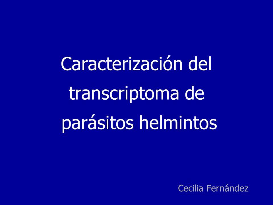 Caracterización del transcriptoma de parásitos helmintos Cecilia Fernández