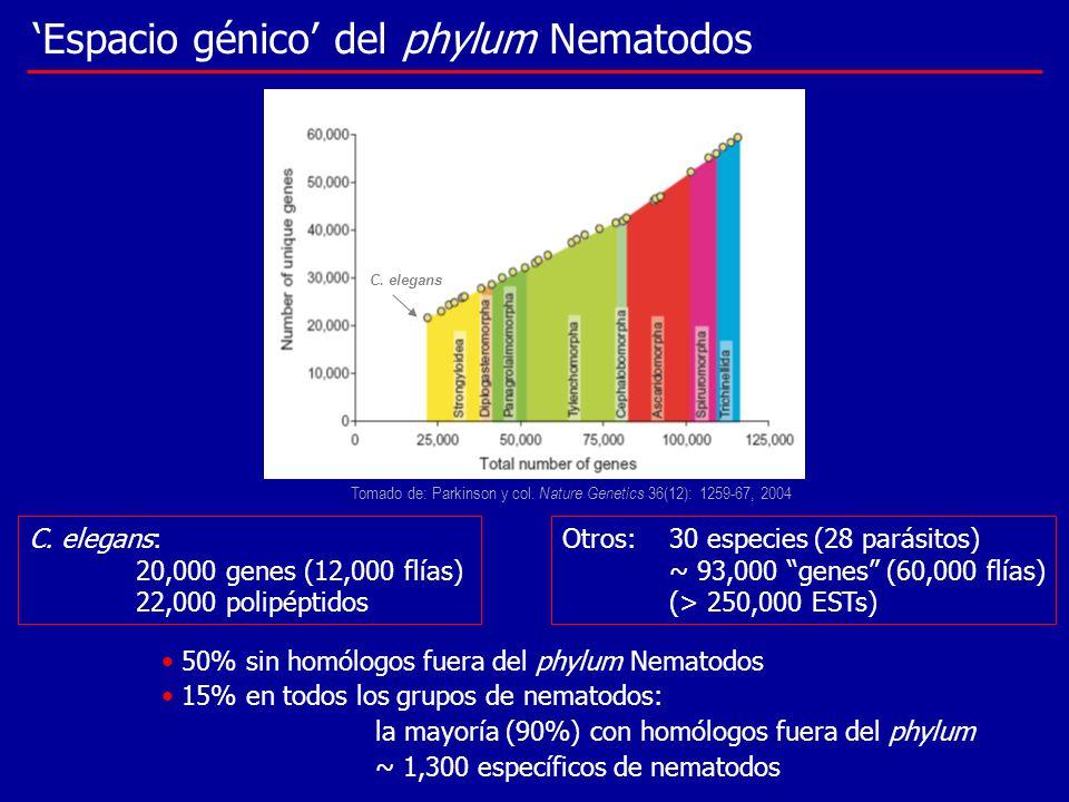 C. elegans: 20,000 genes (12,000 flías) 22,000 polipéptidos Otros: 30 especies (28 parásitos) ~ 93,000 genes (60,000 flías) (> 250,000 ESTs) Espacio g