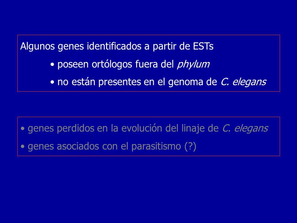 Algunos genes identificados a partir de ESTs poseen ortólogos fuera del phylum no están presentes en el genoma de C. elegans genes perdidos en la evol