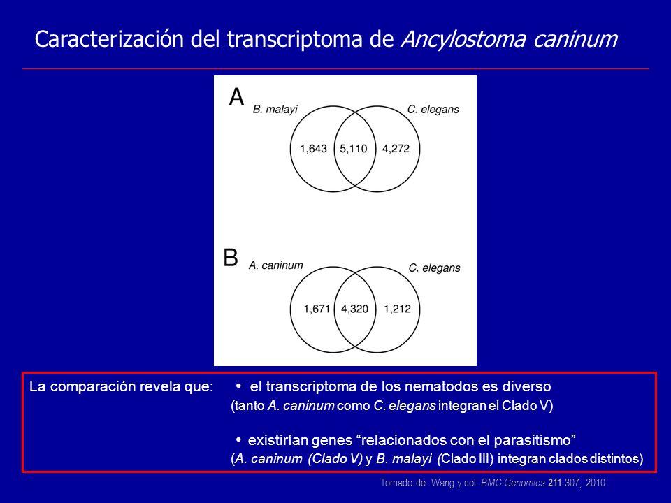 Caracterización del transcriptoma de Ancylostoma caninum Tomado de: Wang y col. BMC Genomics 211 :307, 2010 La comparación revela que: el transcriptom