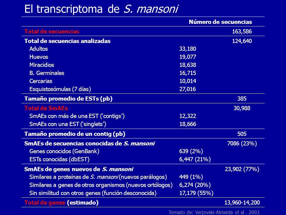 El transcriptoma de S. mansoni Número de secuencias Total de secuencias163,586 Total de secuencias analizadas Adultos Huevos Miracidios B. Germinales