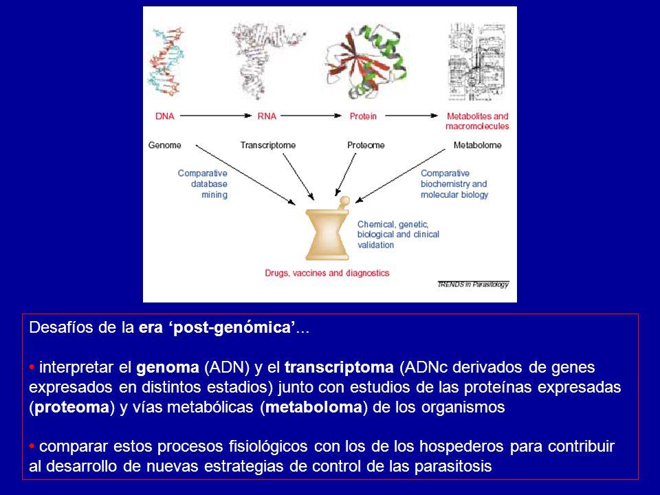 Desafíos de la era post-genómica... interpretar el genoma (ADN) y el transcriptoma (ADNc derivados de genes expresados en distintos estadios) junto co