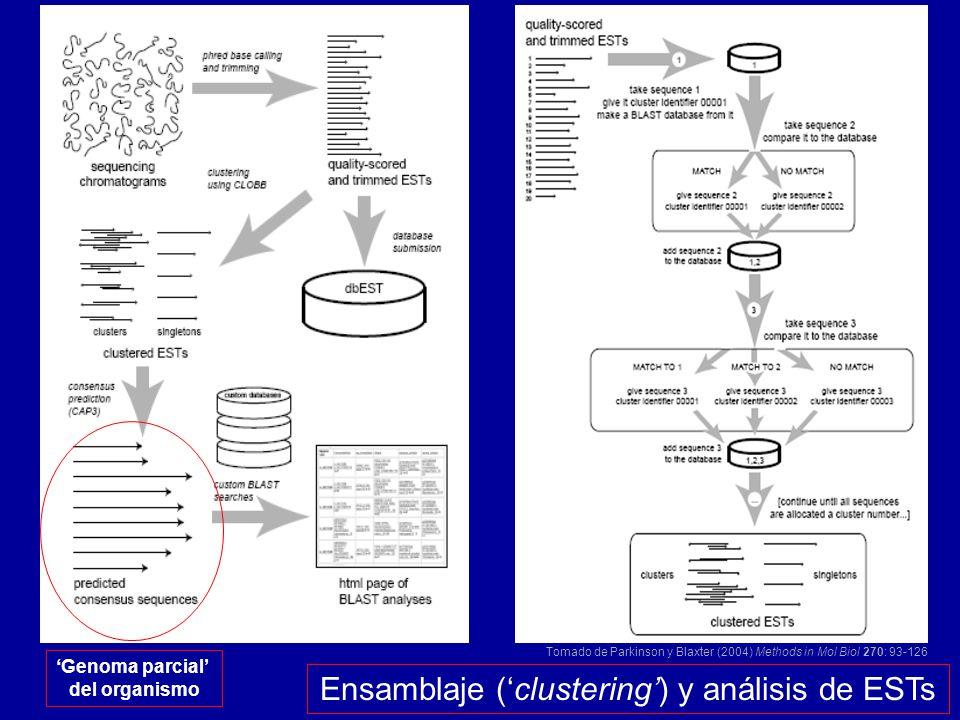 Ensamblaje (clustering) y análisis de ESTs Tomado de Parkinson y Blaxter (2004) Methods in Mol Biol 270: 93-126 Genoma parcial del organismo