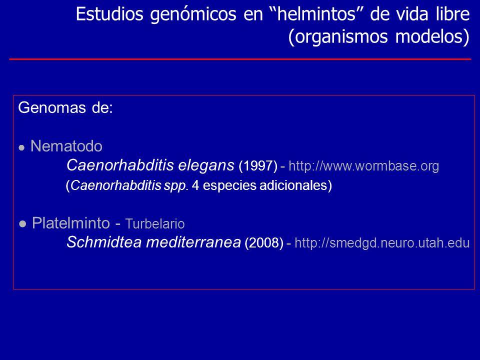 Estudios genómicos en helmintos de vida libre (organismos modelos) Genomas de: Nematodo Caenorhabditis elegans (1997) - http://www.wormbase.org (Caeno