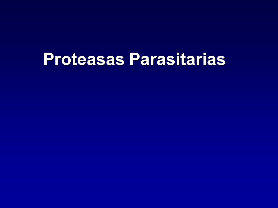 Inhibidores de Proteasas Inhibidores Naturales Mas de 100 compuestos naturales identificados Desde bacterias a animales y plantas Reversibles o seudo-irreversibles Impiden acceso al sitio activo Proteicos, de 50 a 400 aa Clase específicos excepto familia de α- Macroglobulina Inhibidores de Serina y Cisteína proteasas son los mejor caracterizados.