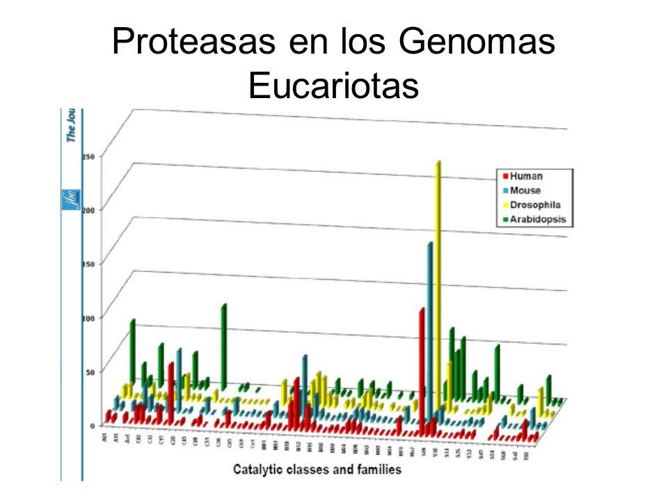 Proteasas en los Genomas Eucariotas