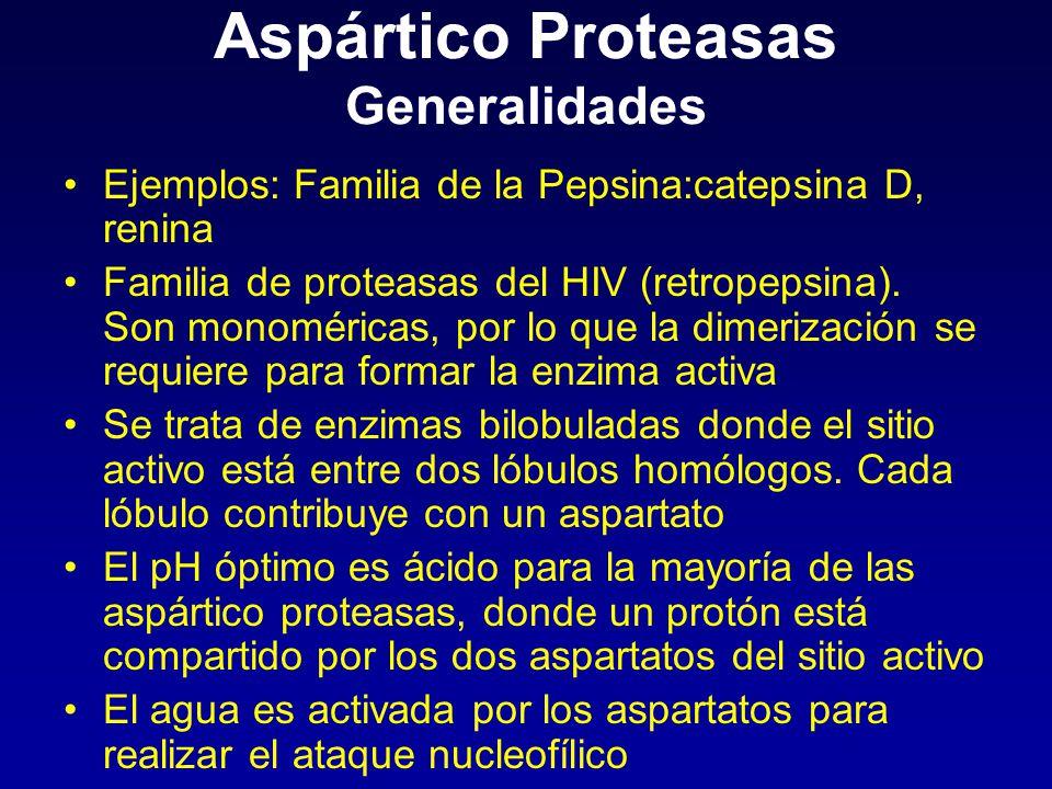Aspártico Proteasas Generalidades Ejemplos: Familia de la Pepsina:catepsina D, renina Familia de proteasas del HIV (retropepsina). Son monoméricas, po