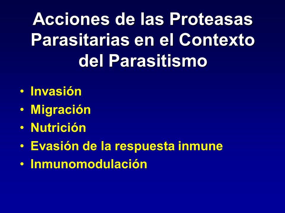 Acciones de las Proteasas Parasitarias en el Contexto del Parasitismo Invasión Migración Nutrición Evasión de la respuesta inmune Inmunomodulación