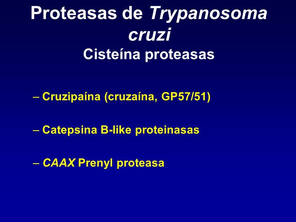 Proteasas de Trypanosoma cruzi Cisteína proteasas –Cruzipaína (cruzaína, GP57/51) –Catepsina B-like proteinasas –CAAX Prenyl proteasa