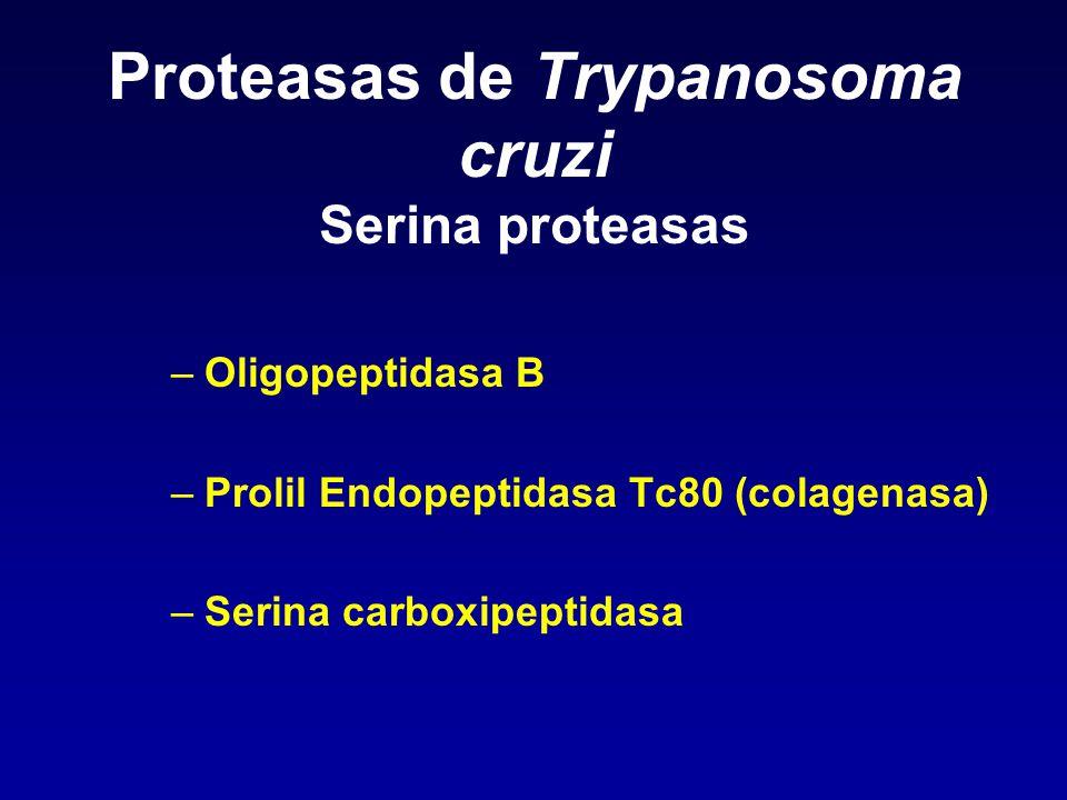 Proteasas de Trypanosoma cruzi Serina proteasas –Oligopeptidasa B –Prolil Endopeptidasa Tc80 (colagenasa) –Serina carboxipeptidasa