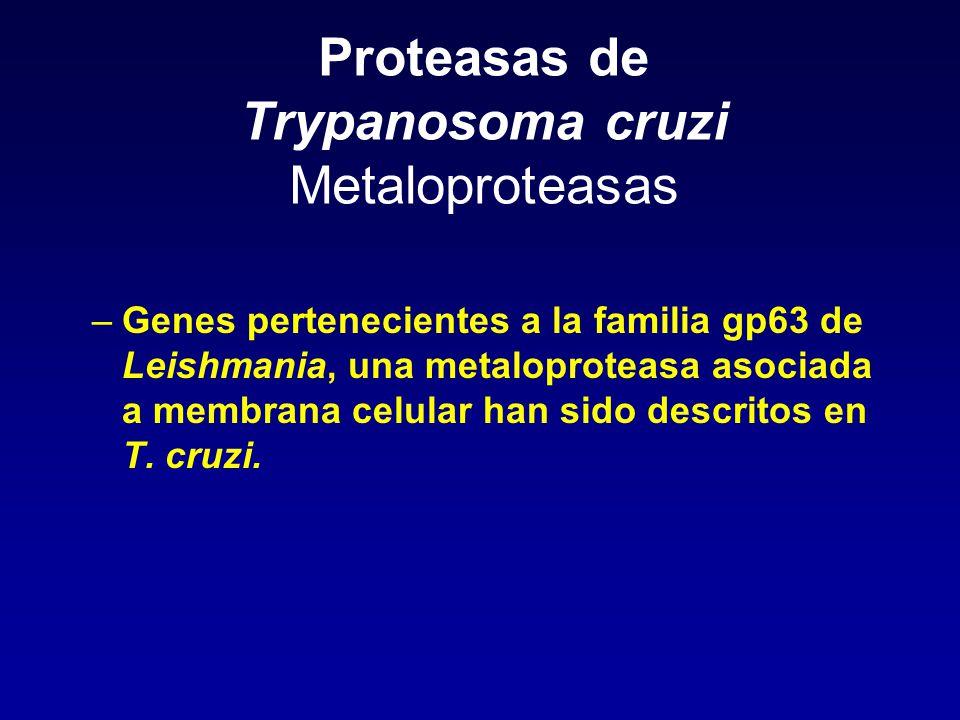 Proteasas de Trypanosoma cruzi Metaloproteasas –Genes pertenecientes a la familia gp63 de Leishmania, una metaloproteasa asociada a membrana celular h