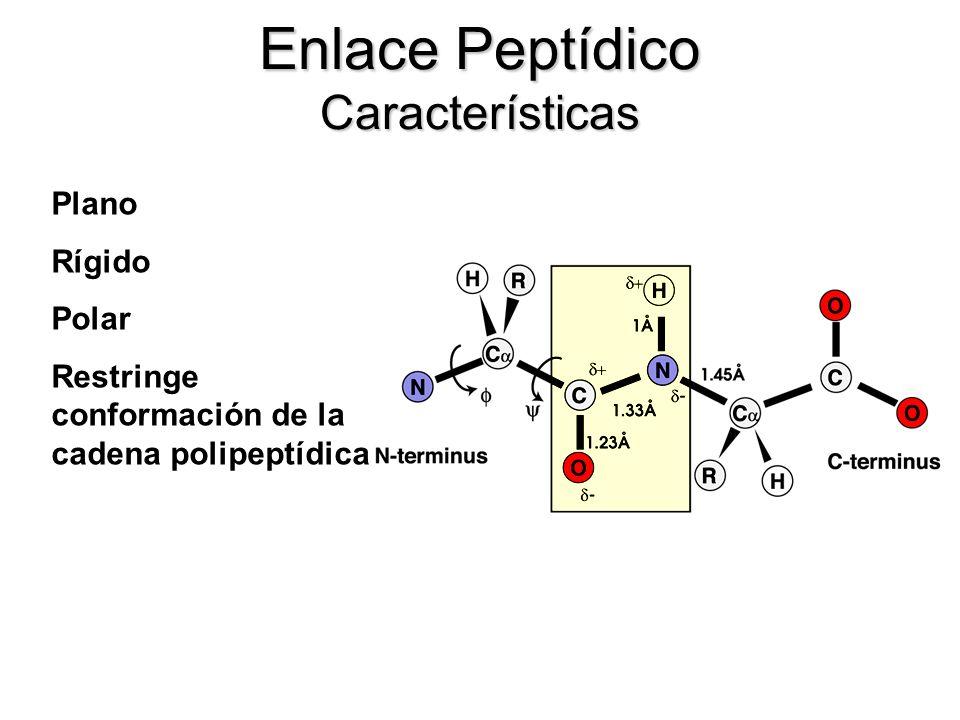Enlace Peptídico Características Plano Rígido Polar Restringe conformación de la cadena polipeptídica