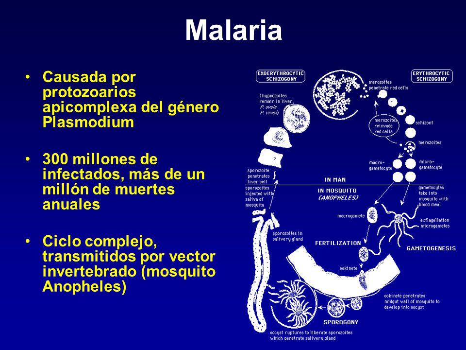 Malaria Causada por protozoarios apicomplexa del género Plasmodium 300 millones de infectados, más de un millón de muertes anuales Ciclo complejo, tra