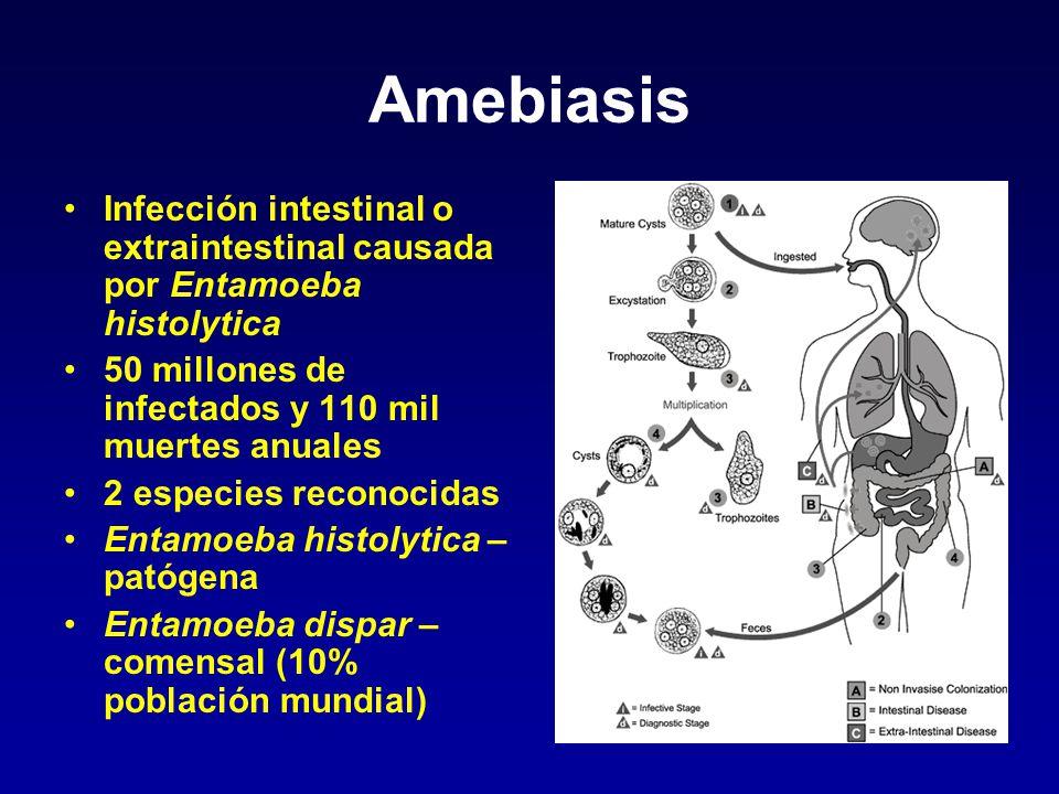 Amebiasis Infección intestinal o extraintestinal causada por Entamoeba histolytica 50 millones de infectados y 110 mil muertes anuales 2 especies reco