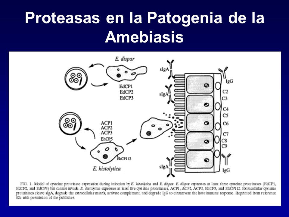 Proteasas en la Patogenia de la Amebiasis