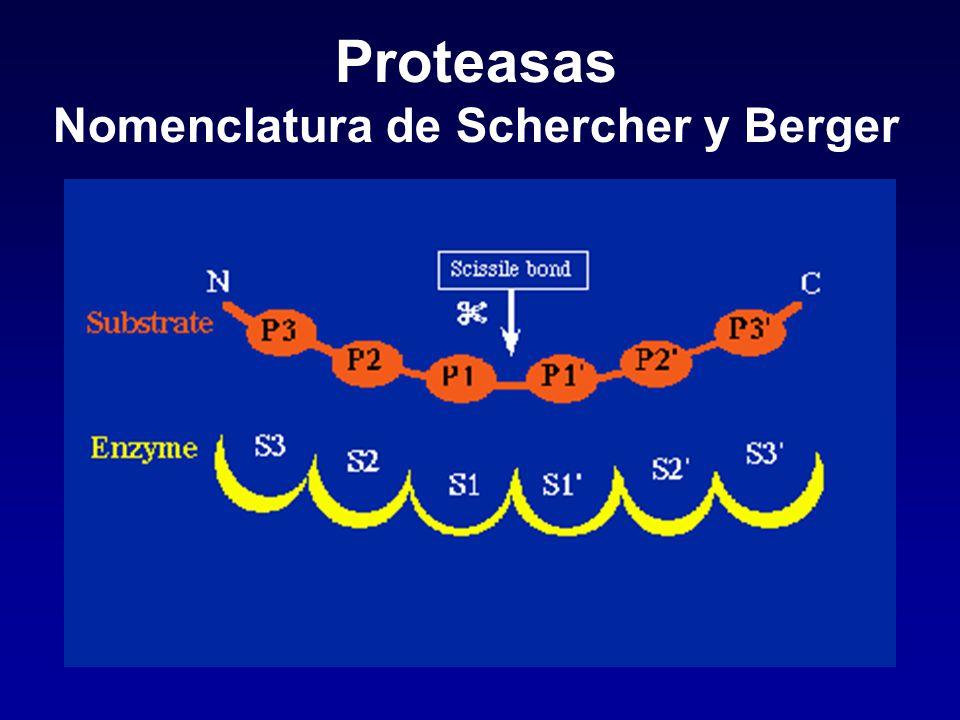 Proteasas Clasificación según mecanismo de acción Serina proteasas Cisteína proteasas Metaloproteasas Aspártico proteasas Treonina proteasas Glutámico proteasas