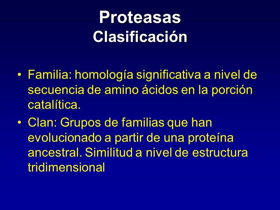 Proteasas Clasificación Familia: homología significativa a nivel de secuencia de amino ácidos en la porción catalítica. Clan: Grupos de familias que h