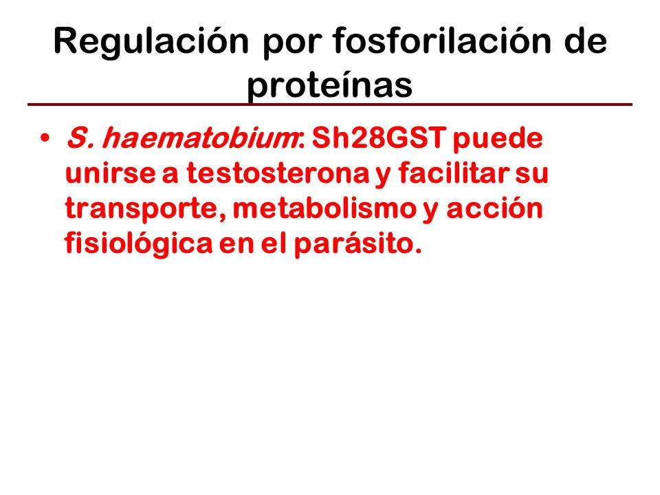 Regulación por fosforilación de proteínas S.
