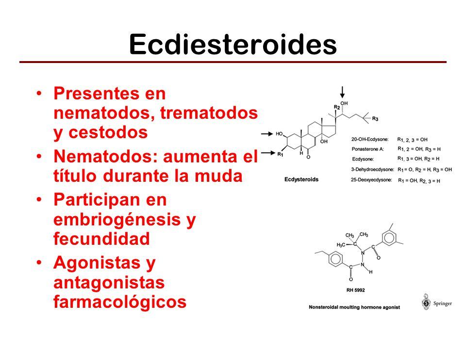 Ecdiesteroides Presentes en nematodos, trematodos y cestodos Nematodos: aumenta el título durante la muda Participan en embriogénesis y fecundidad Agonistas y antagonistas farmacológicos