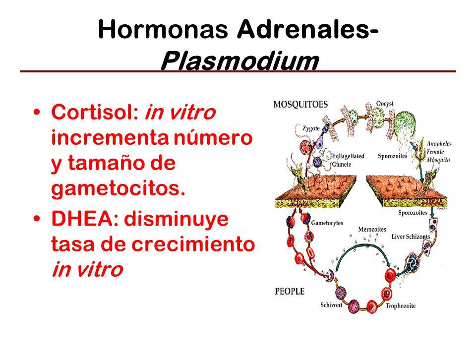 Hormonas Adrenales- Plasmodium Cortisol: in vitro incrementa número y tamaño de gametocitos.