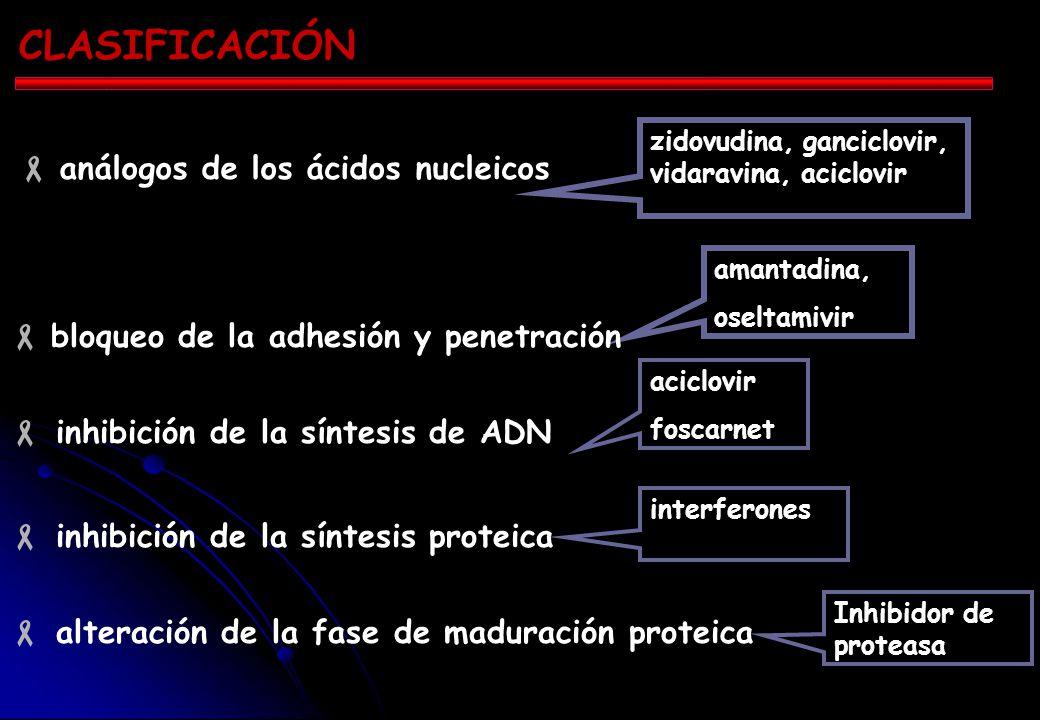 CLASIFICACIÓN inhibición de la síntesis de ADN inhibición de la síntesis proteica alteración de la fase de maduración proteica interferones aciclovir foscarnet amantadina, oseltamivir zidovudina, ganciclovir, vidaravina, aciclovir análogos de los ácidos nucleicos bloqueo de la adhesión y penetración Inhibidor de proteasa