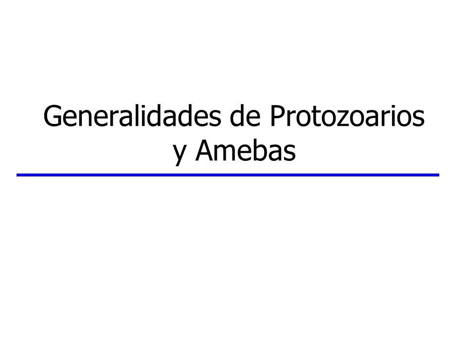 Amebas Anatomía y Fisiología (cont.) Organelos Faltan mitocondrias en especies parásitas RE, ribosomas, aparato de Golgi Vacuolas alimenticias: lipídicas Vacuolas contráctiles (en formas de vida libre) Cuerpos formadores de pared (WFB) (en especies con quistes) Cromidias: masas de ribosomas Otros componentes Gotas de glicógeno Citoesqueleto: microfilamentos de 4-10 nm actomiosina