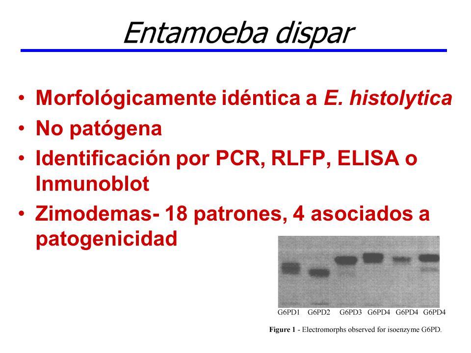 Entamoeba dispar Morfológicamente idéntica a E. histolytica No patógena Identificación por PCR, RLFP, ELISA o Inmunoblot Zimodemas- 18 patrones, 4 aso