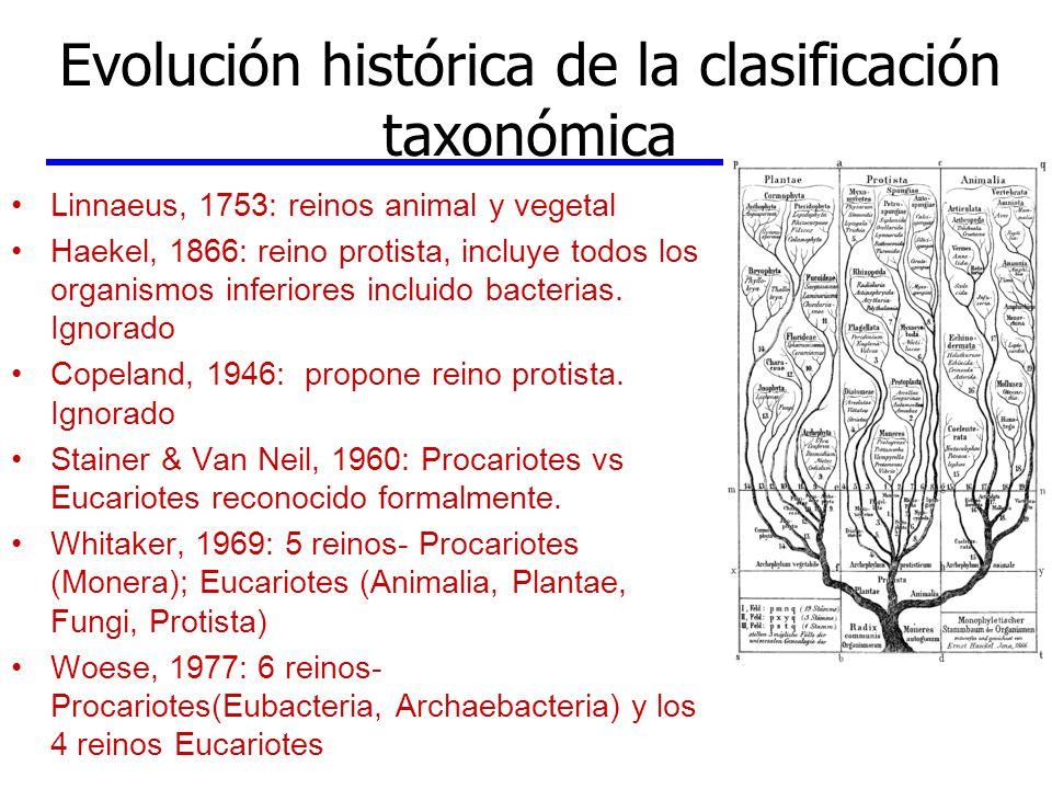Evolución histórica de la clasificación taxonómica Linnaeus, 1753: reinos animal y vegetal Haekel, 1866: reino protista, incluye todos los organismos