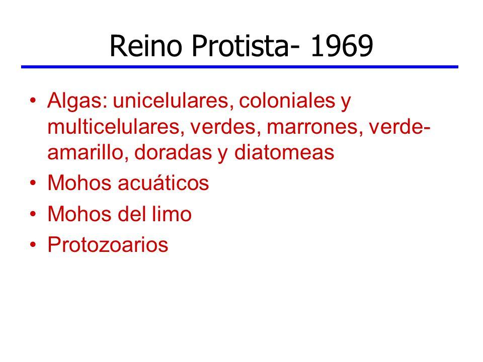 Reino Protista- 1969 Algas: unicelulares, coloniales y multicelulares, verdes, marrones, verde- amarillo, doradas y diatomeas Mohos acuáticos Mohos de