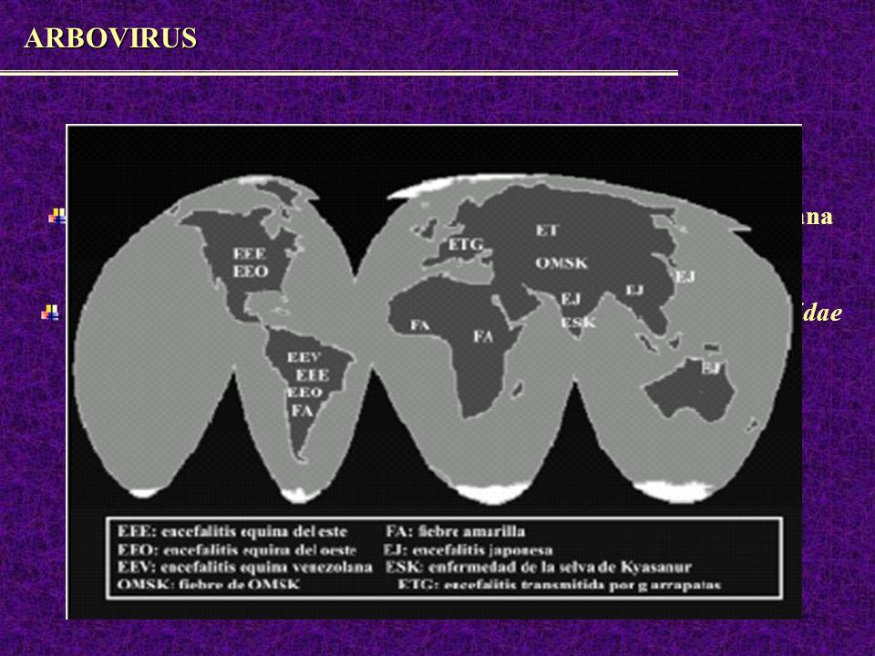 Flaviviridae más de 60 tipos, 23 causan encefalitis y fiebres hemorrágicas Dengue, Fiebre Amarilla, Virus de St Louis, Virus del Nilo Occidental, etc