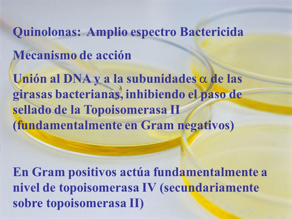 Quinolonas: Amplio espectro Bactericida Mecanismo de acción Unión al DNA y a la subunidades de las girasas bacterianas, inhibiendo el paso de sellado de la Topoisomerasa II (fundamentalmente en Gram negativos) En Gram positivos actúa fundamentalmente a nivel de topoisomerasa IV (secundariamente sobre topoisomerasa II)