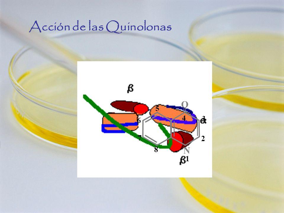 4 N 1N 1 O 2 3 5 6 7 8 Acción de las Quinolonas