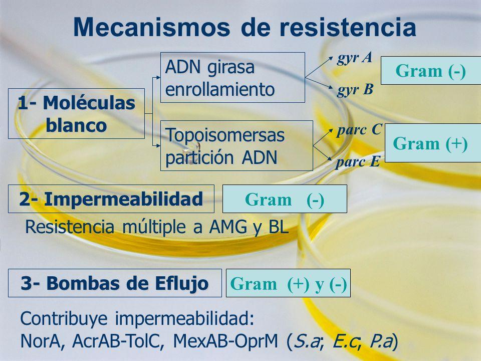 Mecanismos de resistencia 1- Moléculas blanco ADN girasa enrollamiento Topoisomersas partición ADN gyr A gyr B 2- Impermeabilidad 3- Bombas de Eflujo