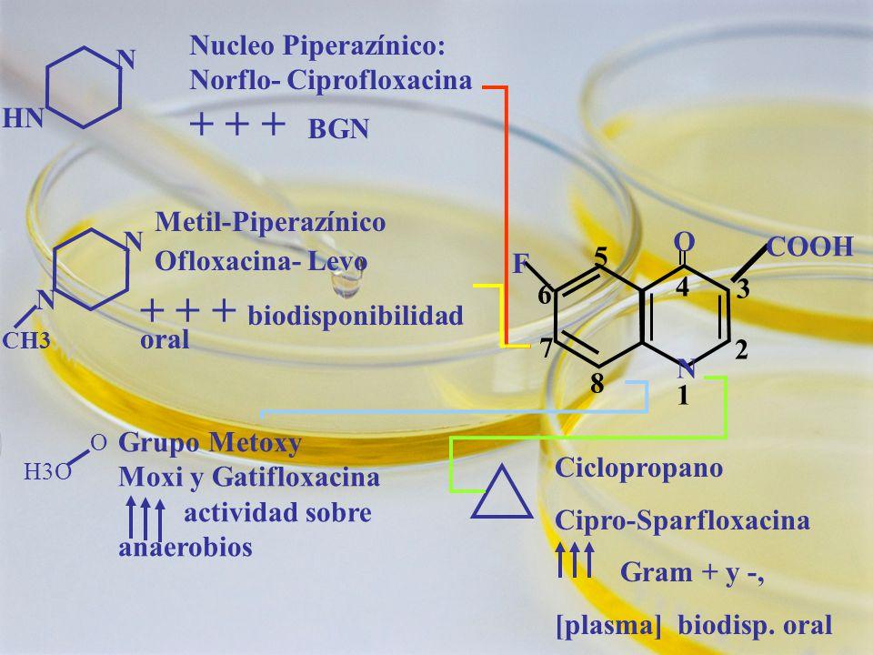 4 N 1N 1 O 2 3 5 6 7 8 COOH F N HN Nucleo Piperazínico: Norflo- Ciprofloxacina + + + BGN N N CH3 Metil-Piperazínico Ofloxacina- Levo + + + biodisponibilidad oral Ciclopropano Cipro-Sparfloxacina Gram + y -, [plasma] biodisp.