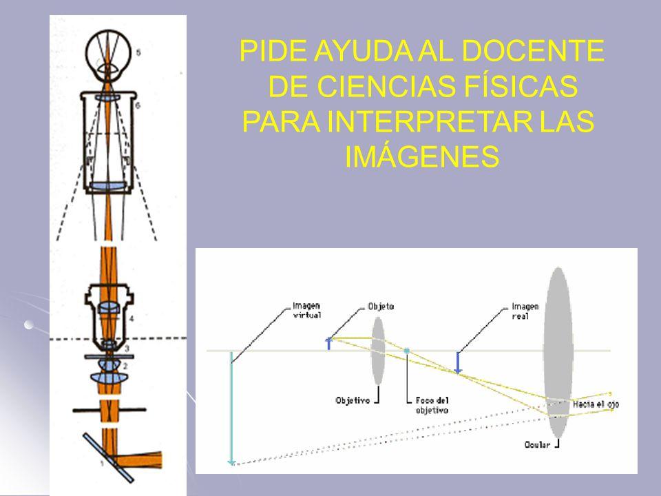PIDE AYUDA AL DOCENTE DE CIENCIAS FÍSICAS PARA INTERPRETAR LAS IMÁGENES